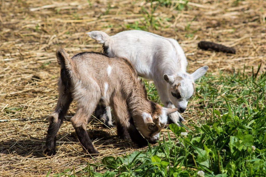 This Idyllic Santa Monica Ranch Pairs Unique Gourmet Experiences With Adorable Farm Animals
