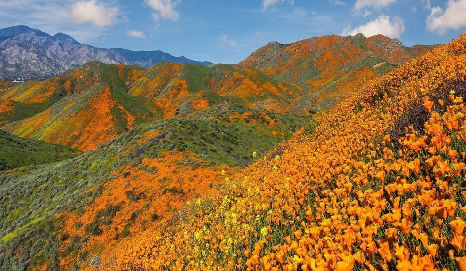 Celebrate Earth Day With These Stunning Natural Havens In SoCal