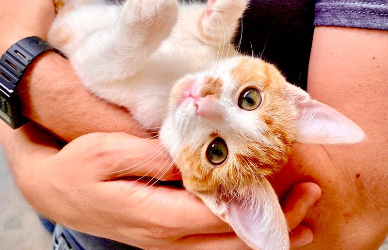 Cuddle Adoptable Kittens And At This Pop-Up Lounge In Venice