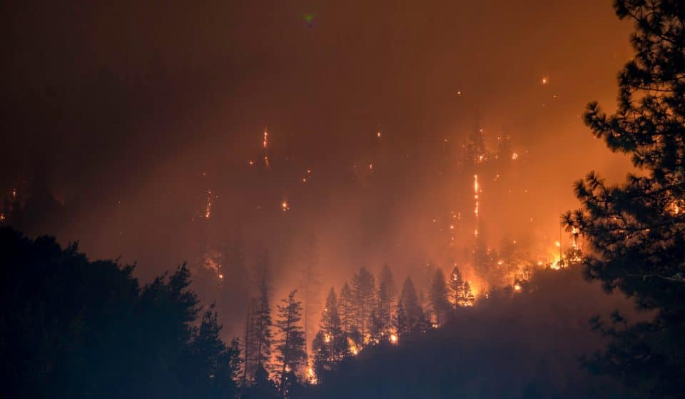 All CA National Forests To Close For Two Weeks Starting Today