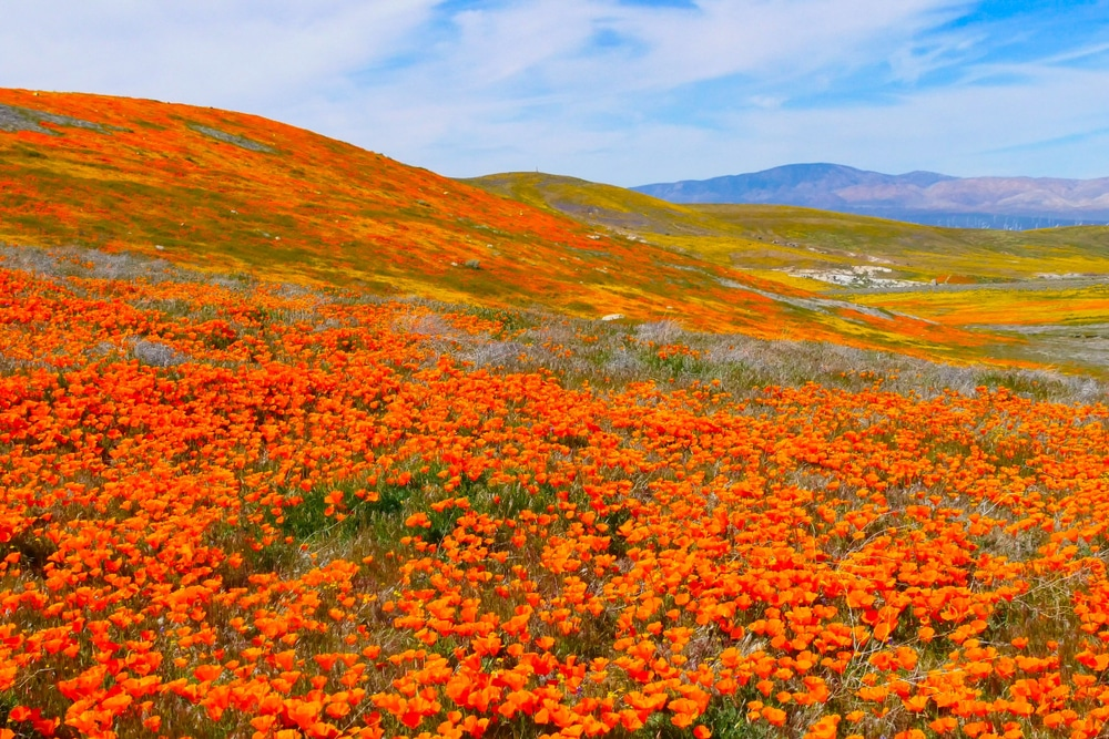7 Breathtaking And Unique Natural Wonders Less Than 4hrs From L.A.