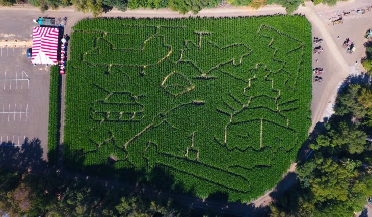 Get Lost In This Epic Corn Maze On Burbank Boulevard