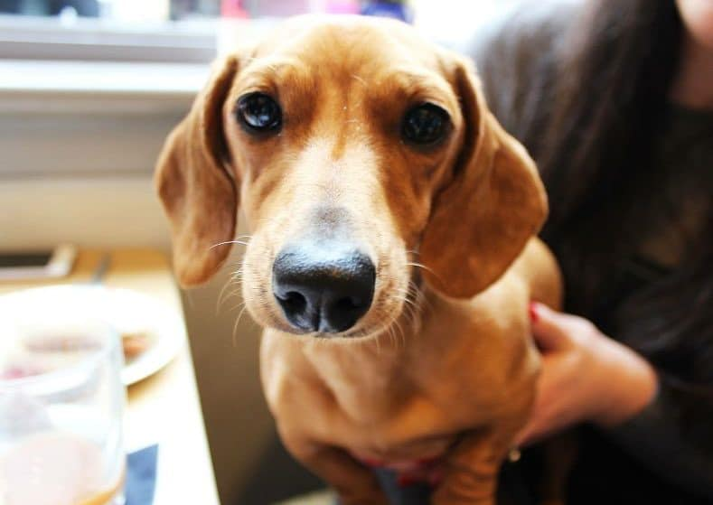 A Sausage Dog Café Is Coming To The Northern Quarter