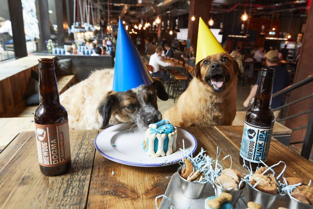This Manchester Bar Is Hosting Cute Birthday Parties For Dogs