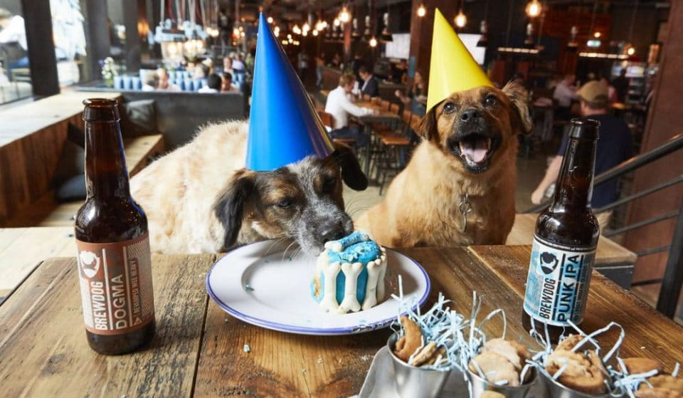 This Manchester Bar Is Hosting Birthday Parties For Dogs