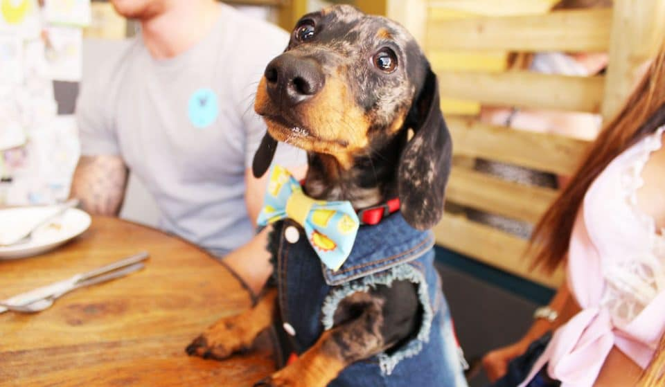 A Sausage Dog Cafe Is Coming To Manchester