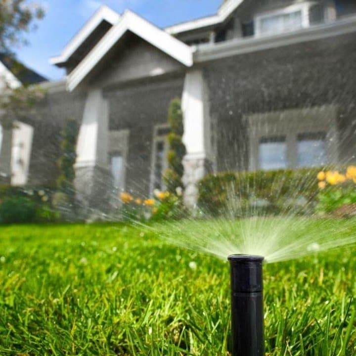 What The Hosepipe Ban Means For You And Your Garden