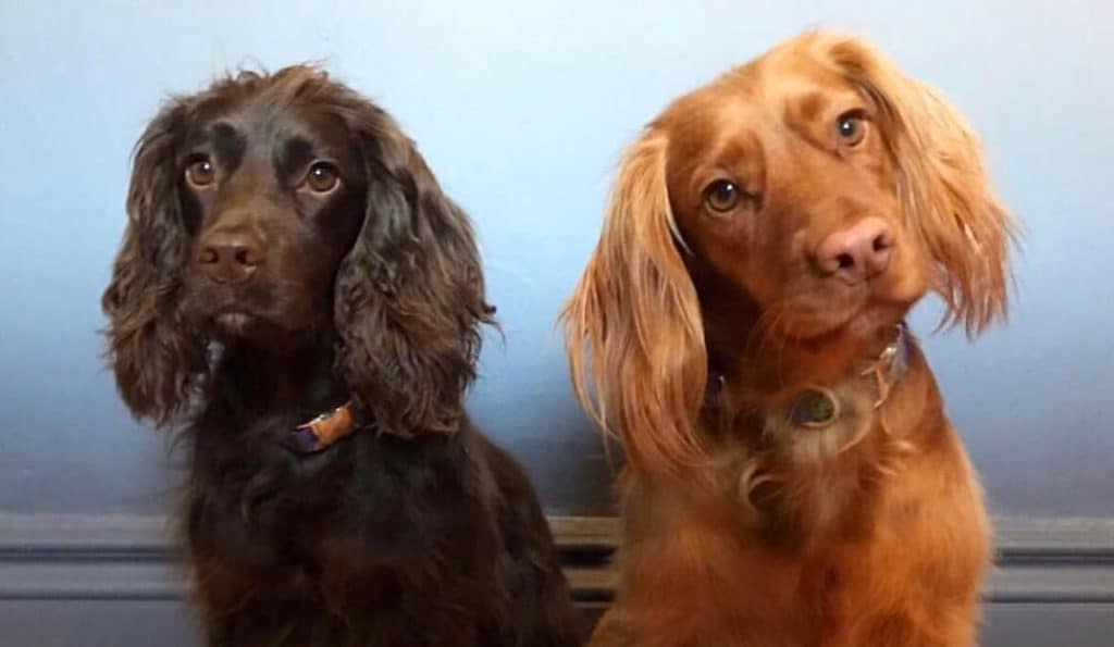 A Free Festival Celebrating Dogs In Manchester Is Coming To Saddler's Yard