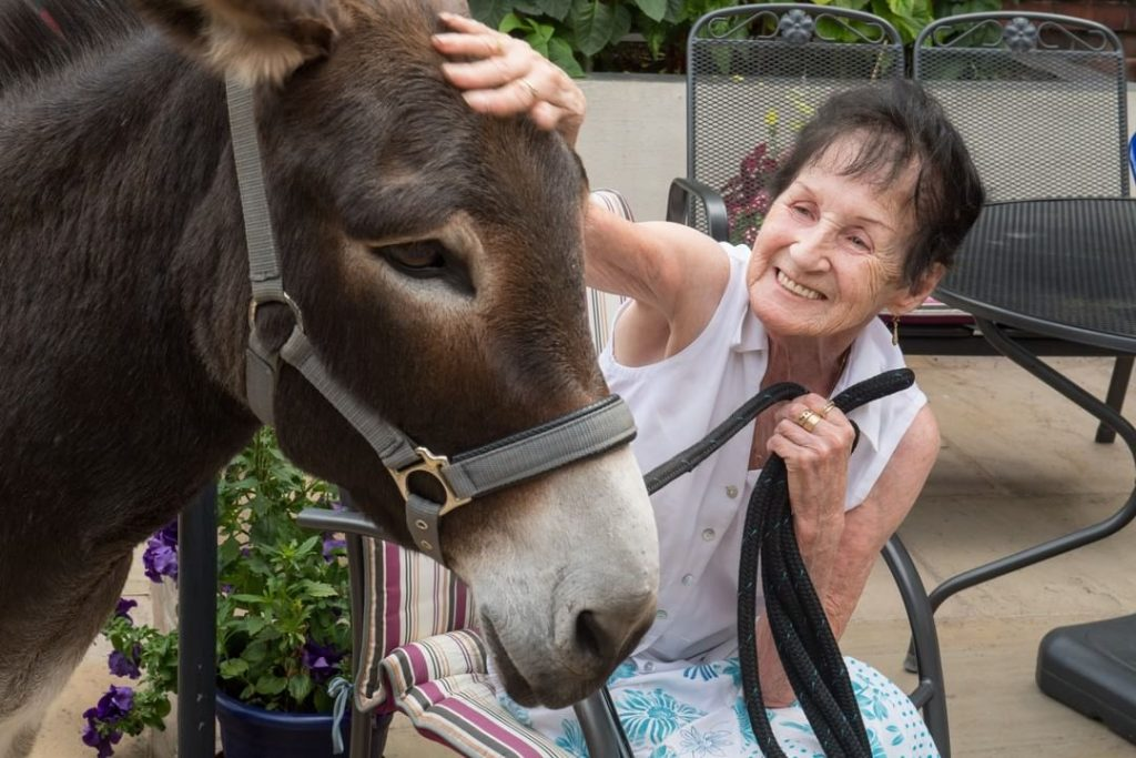 Cheeky Charlie The Therapy Donkey Has Been Working His Magic In A Manchester Hospice