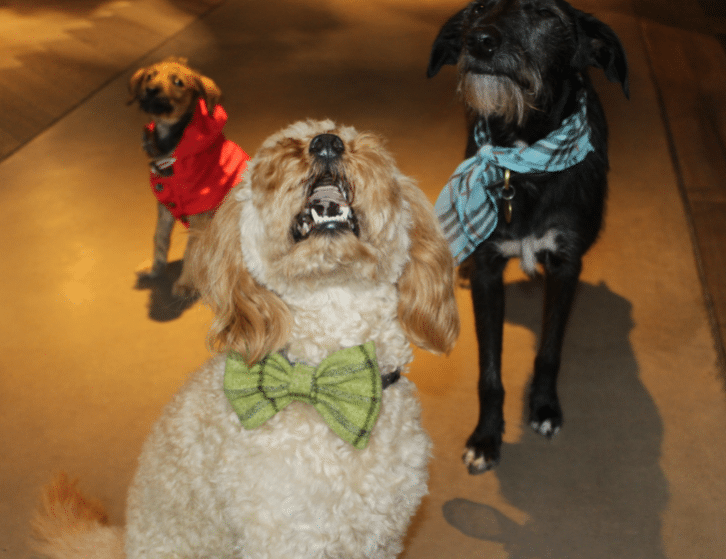 A Manchester Restaurant Has Launched A Happy Hour For Dogs