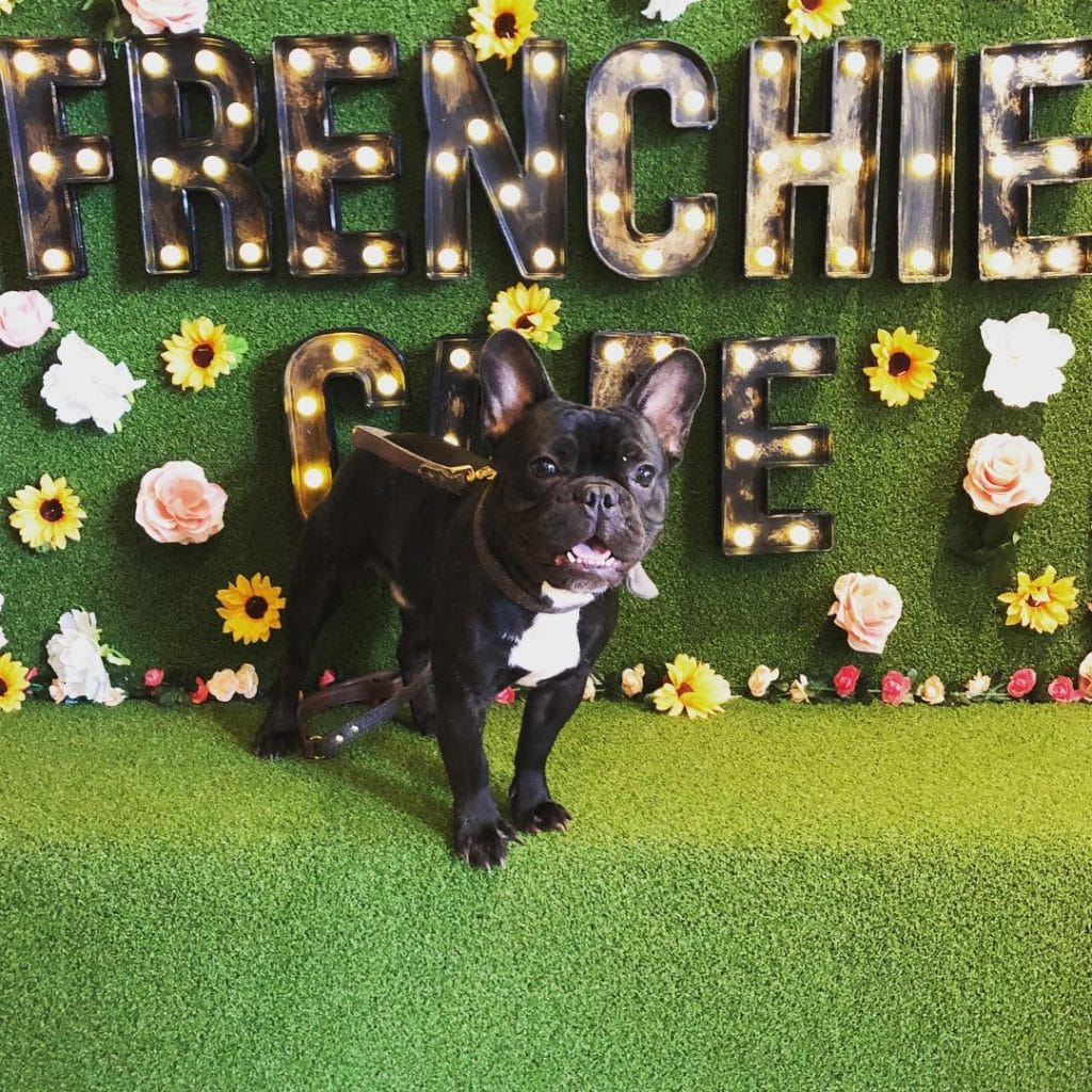 How To Get Your Paws On Tickets To Manchester's First Frenchie Cafe