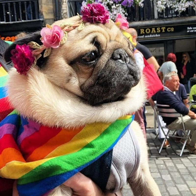 The UK's First Care Scheme For Older LGBTQ+ people (And Their Pets) Will Be Built In Manchester