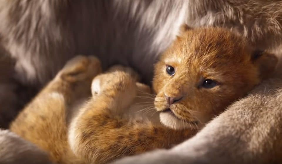 Disney Has Unveiled The First Trailer For 'The Lion King' Remake And We Just Can't Wait