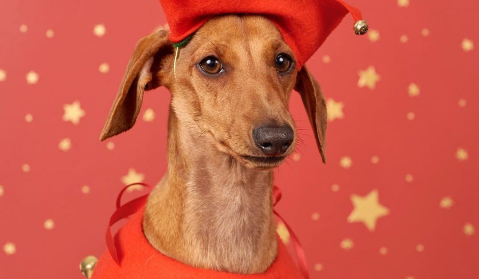 A Manchester Restaurant Will Host A Fancy Dress Competition For Dogs