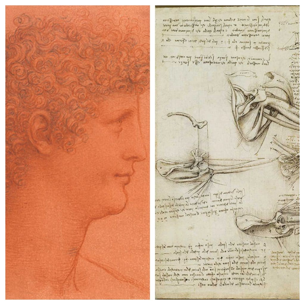 Rarely Seen Leonardo Da Vinci Drawings Have Gone On Display At Manchester Art Gallery For A Limited Time