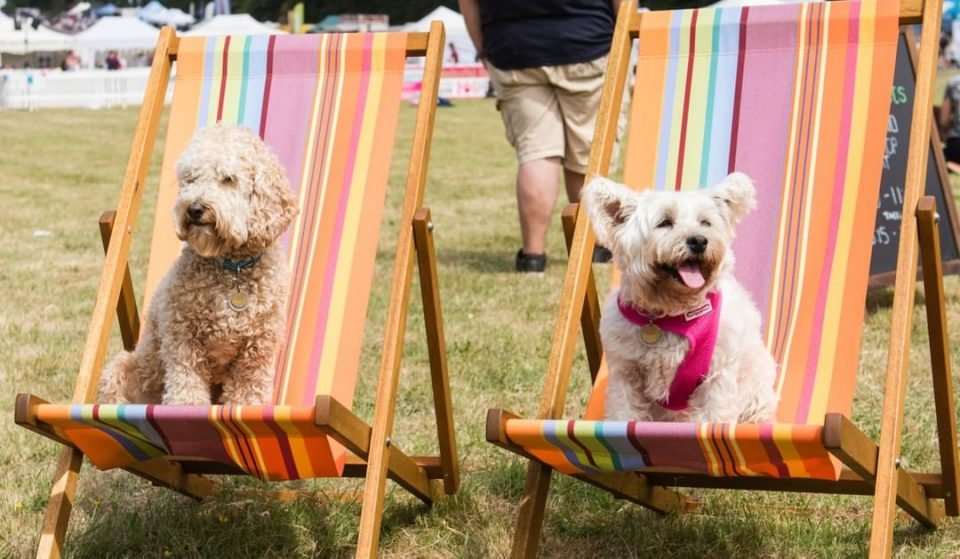 A Dog Festival Is Coming To A Park Near Manchester