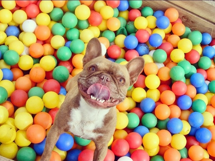 A Dog Playground With Bouncy Castles And Ball Pools Is Coming To Greater Manchester
