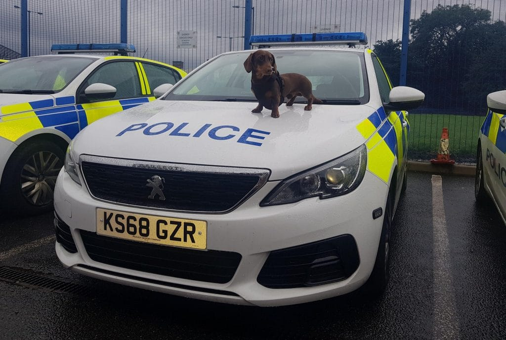 Sausage Dog Ralph Helped His Police Officer Owner Arrest A Wanted Man