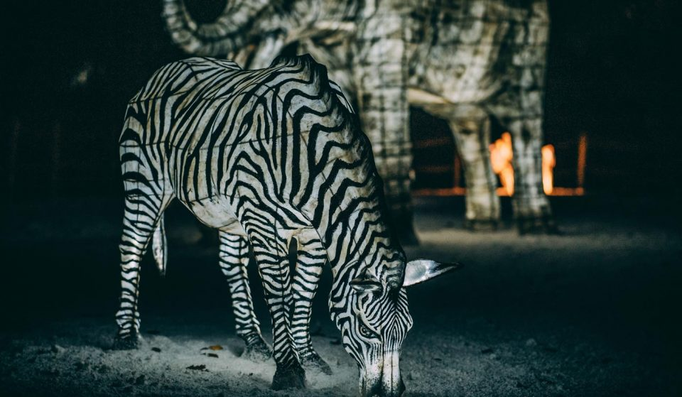 Chester Zoo Lantern Festival Has Returned For Christmas