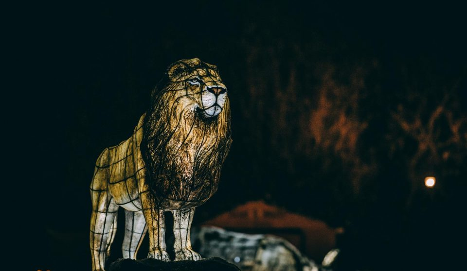 Chester Zoo Is Bringing Back Its Magical Lantern Trail For Christmas 2020