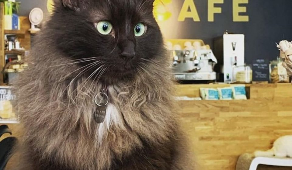 Manchester's Cat Cafe Is Looking For A 'Human Servant' To Care For Its Cats