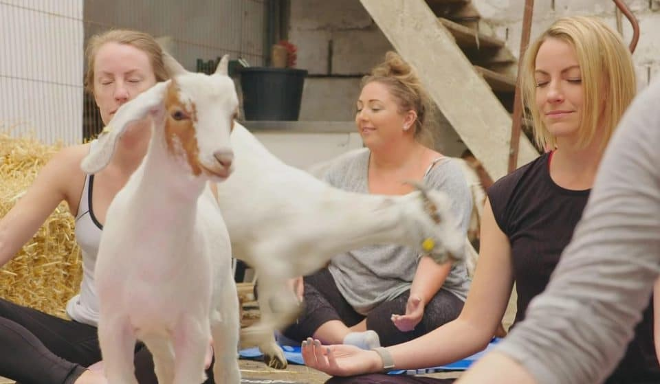 This Ramsbottom Farm Is Hosting Goat Yoga Classes