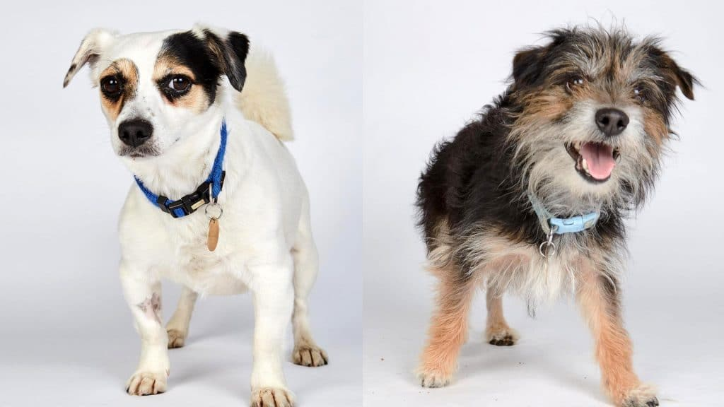 Channel 4 Is Looking For Mancs To Give Abandoned Dogs Forever Homes For This Wholesome Show