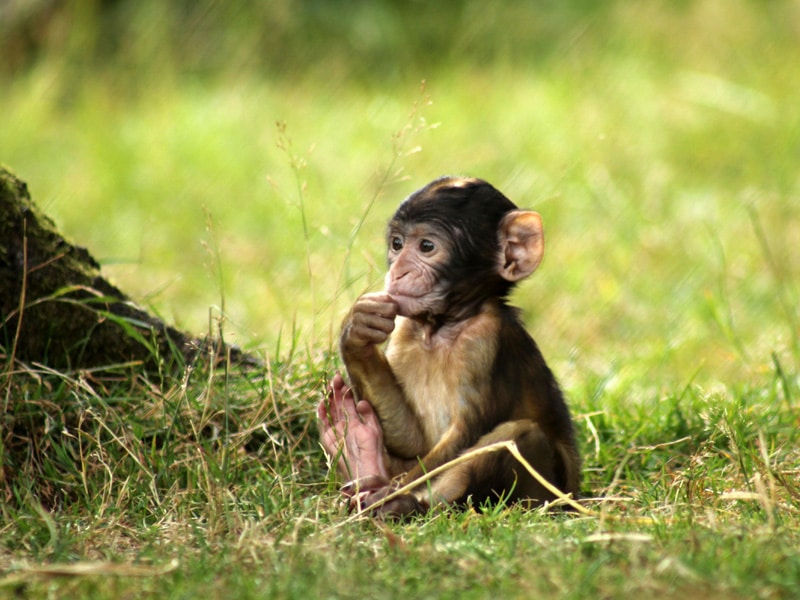 Walk Amongst Free-Roaming Monkeys At This Magical Forest Near Manchester