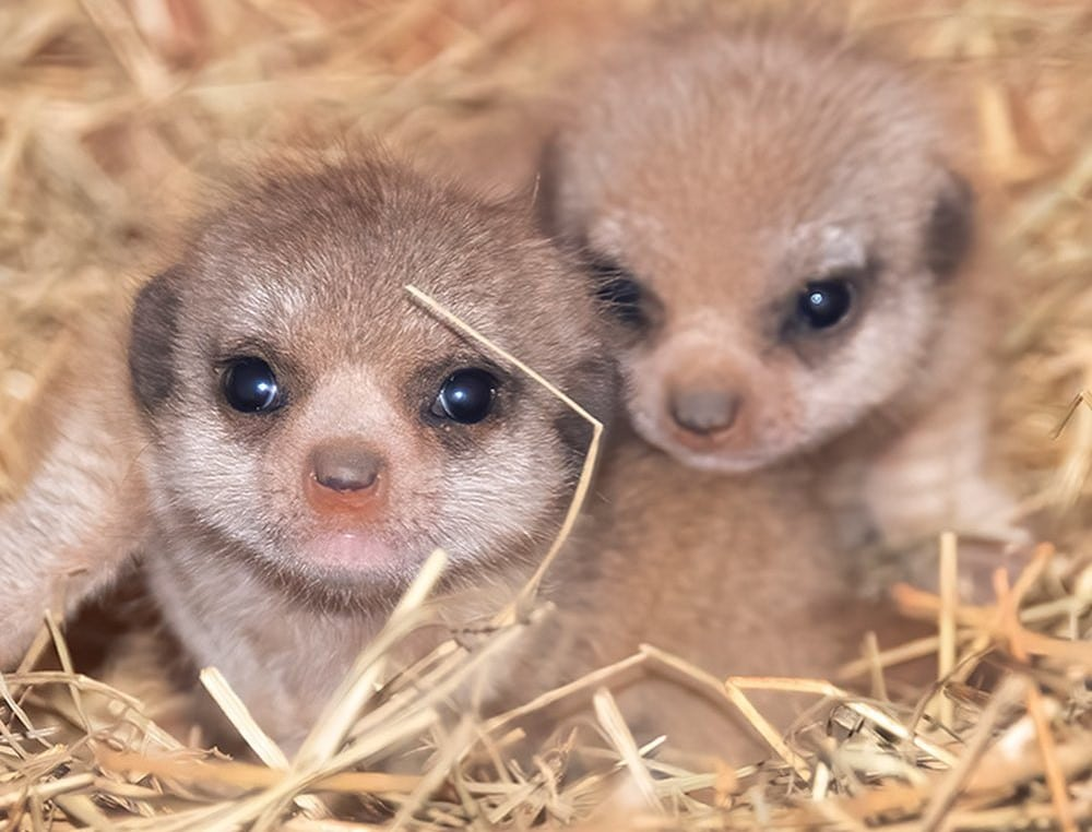 33 Of The Cutest Live Animal Cams From Zoos Around The World