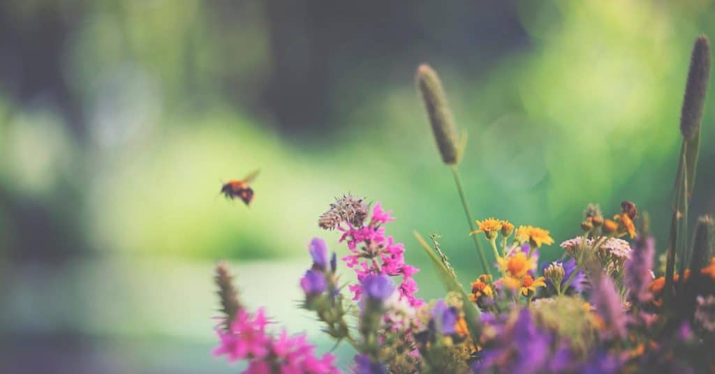 Bees And Wildflowers Are Flourishing As Humans Stay Indoors Due To Coronavirus