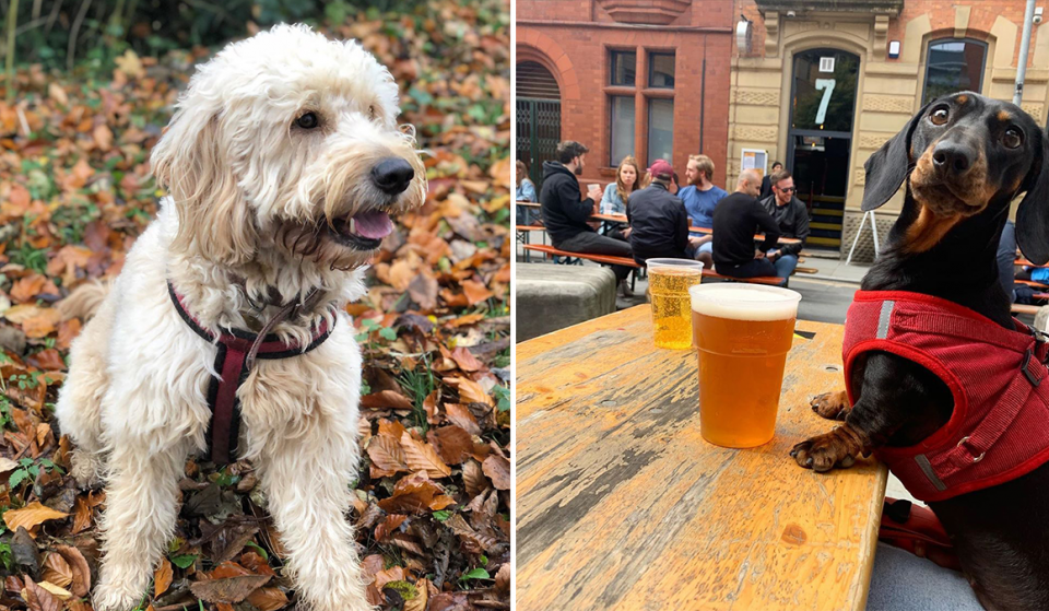 16 Mancunian Dogs You Should Definitely Be Following On Instagram