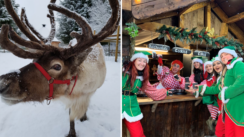 A Drive-Thru Christmas Safari Just One Hour From Manchester Is Set To Bring Some Festive Cheer