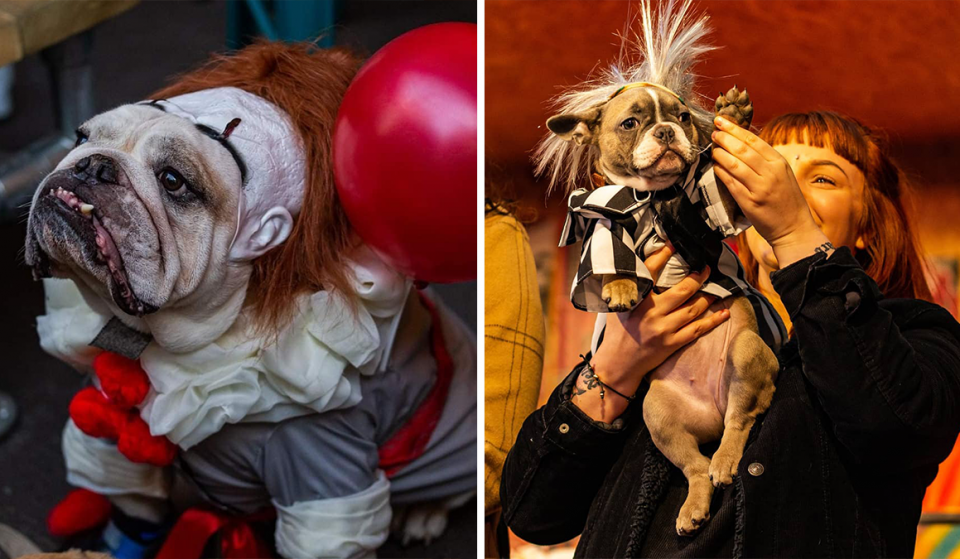 A Halloween Party For Dogs And Their Owners Is Taking Place In Manchester Next Weekend