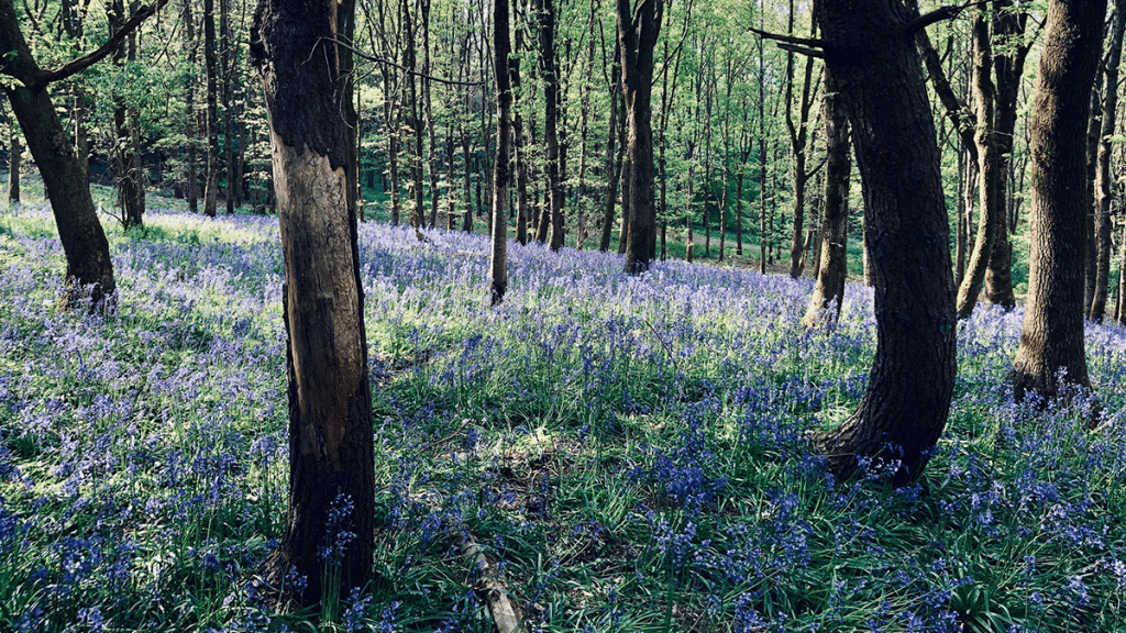 8 Of The Most Wonderful Woodland Walks To Discover This Summer