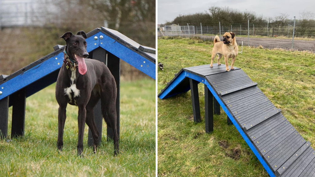 A Fantastic 'Off-Lead' Dog Park Exists In Greater Manchester
