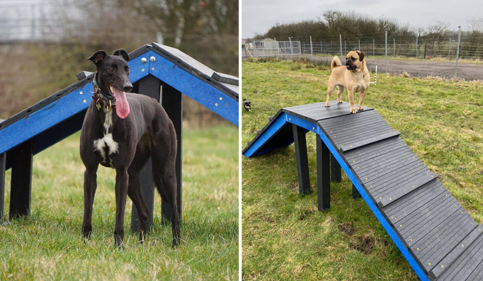 A Fantastic 'Off-Lead' Dog Park Has Opened In Greater Manchester