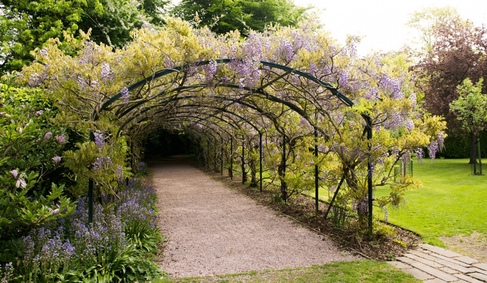 Escape Under An Archway Of Beautiful Wisteria At This Perfectly Peaceful Manchester Garden