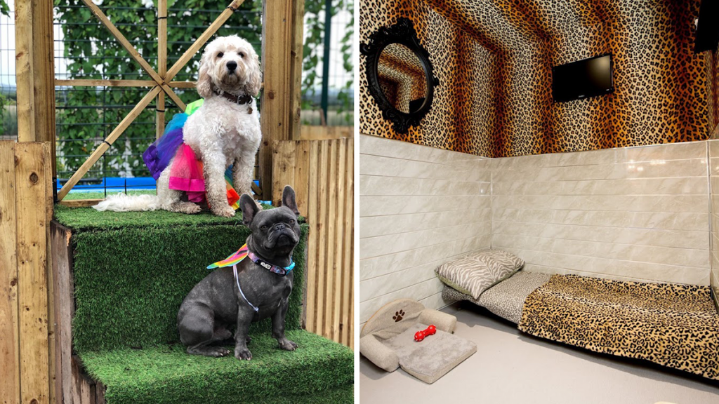 There's A Luxury Dog Hotel & Spa Just Outside Of Manchester, Where Your Dogs Can Go For A Mini Break