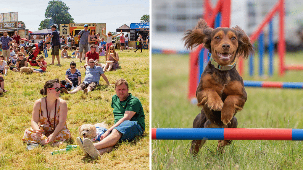 A Fun Dog Festival Is Coming To This Huge Park Near Manchester This Month
