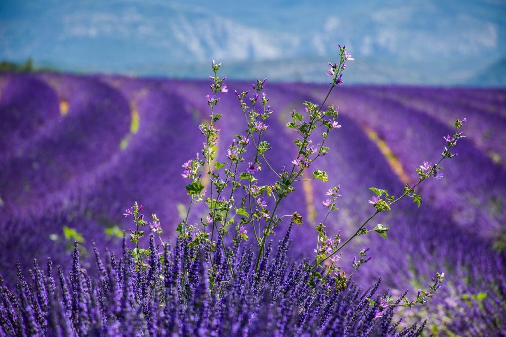 8 Astonishing Places In England To See Beautiful Fields Of Flowers