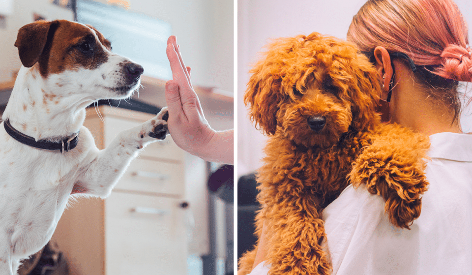 You Can Now Get Paid £24K To Play With Puppies In Manchester & It Sounds Like The Dream Job