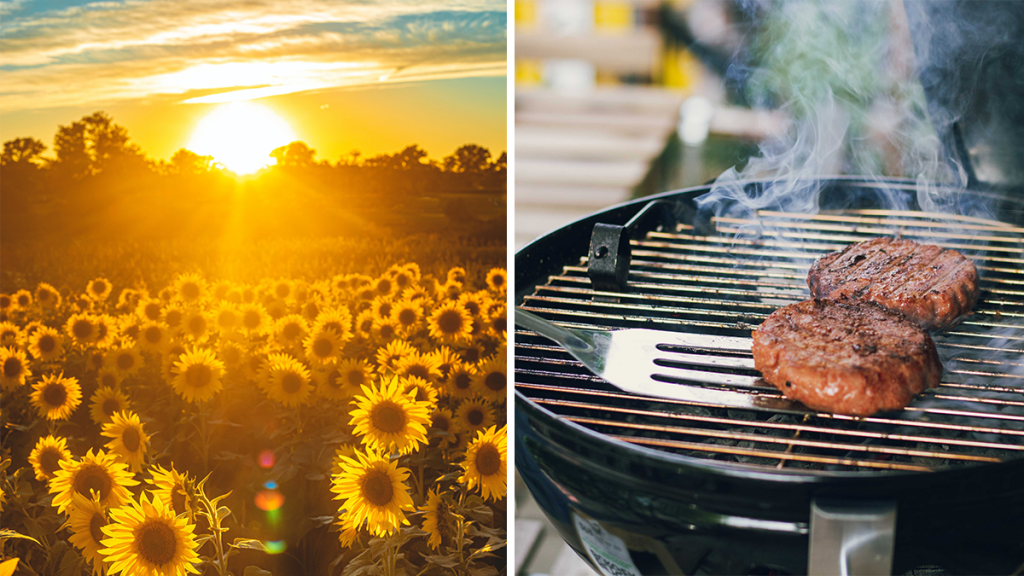 Enjoy All-Day BBQ At This Stunning Sunflower Field Just Outside Of Manchester