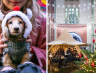 The Refuge Is Set To Sparkle This Christmas With Live Choirs, Festive Markets & Doggy Fancy Dress