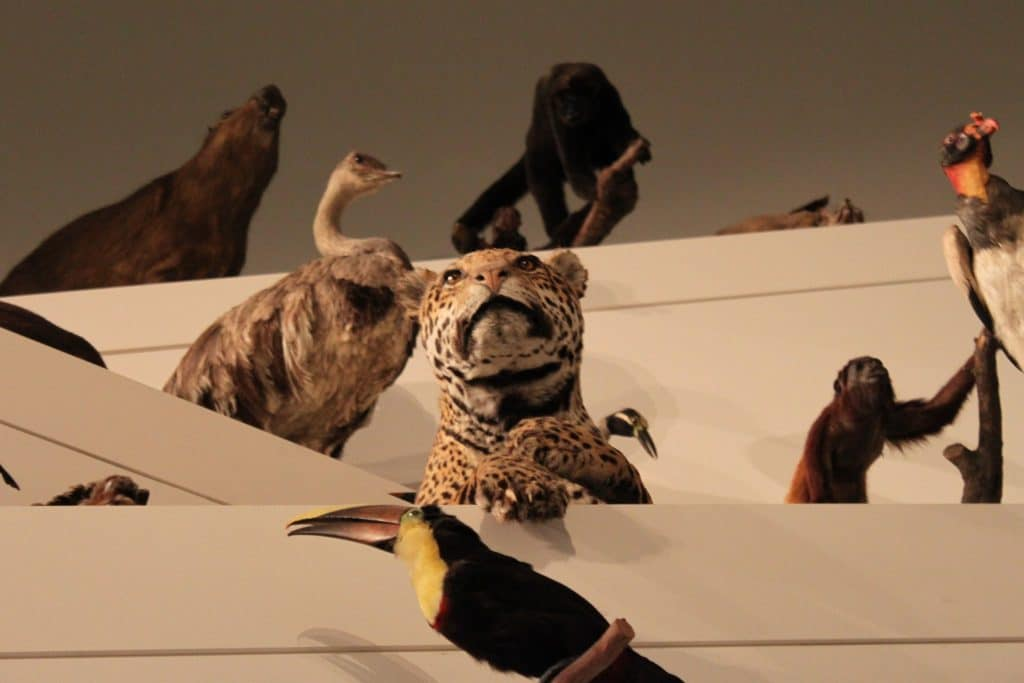 Say Bye To The Taxidermy Room At The Melbourne Museum Before The Animals Disappear