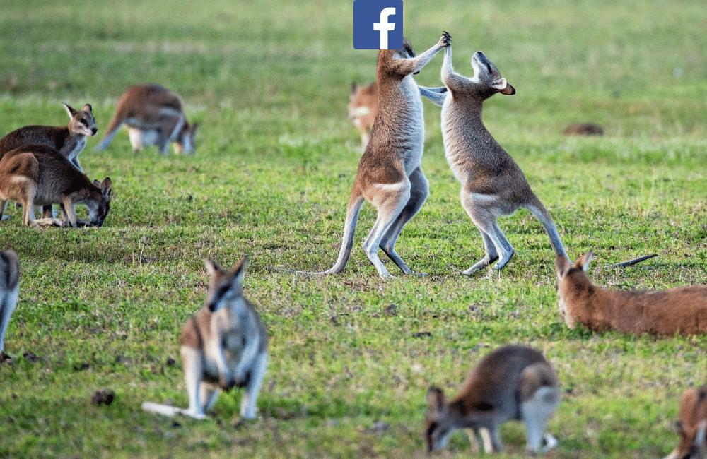 This Is How People Are Reacting To Facebook Banning News Across The Entire Country