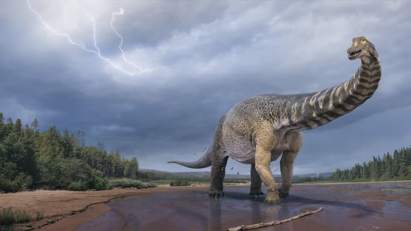 An Unknown Species Of Dinosaur Was Discovered In Australia And It's A Big One