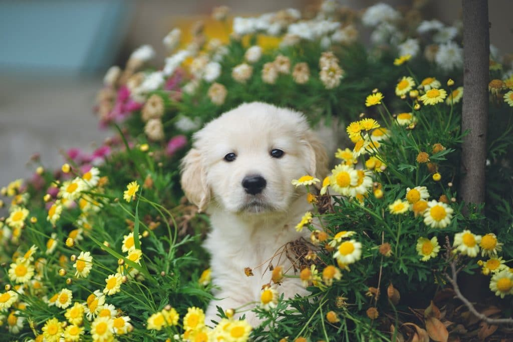 A puppy in flowers