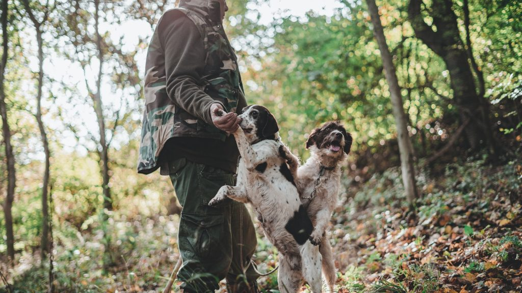 go on a truffle hunt with a dog in victoria