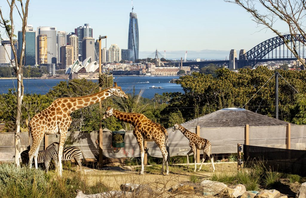 Since You Can't Go To Sydney, Taronga Zoo Is Bringing Back Its Online TV Channel With 24/7 Livestreams