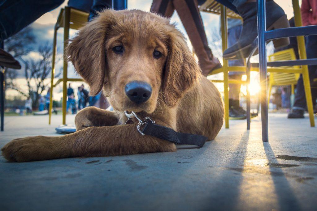 dog at a café